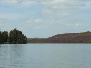 Une partie du lac, encore verdoyant à cette époque-ci!