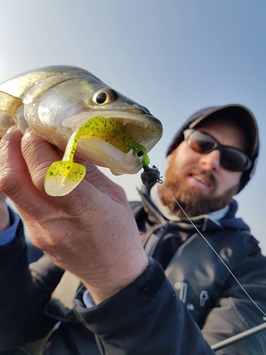 Le Sling Shad est vite devenu une référence pour la pêche du sandre.