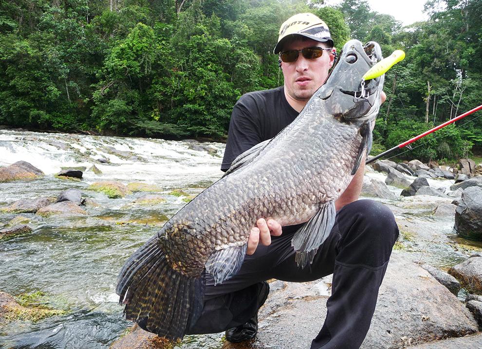 Aïmara de Guyane