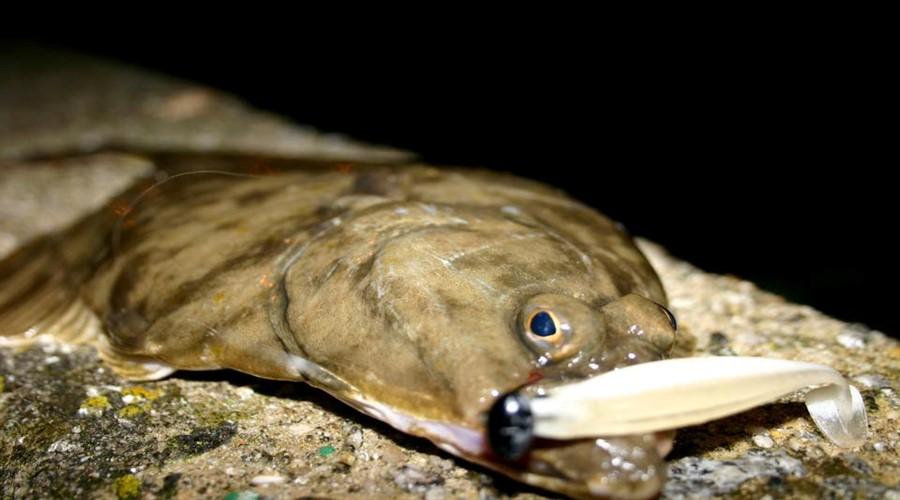 Introduction au rockfishing